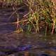 Marsh and Stream 4