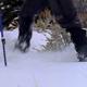 Snowshoeing in Grand Tetons