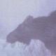 Moose Shakes in Blizzard - VideoHive Item for Sale