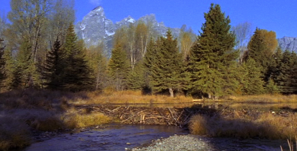 Beaver Dam and Grand Teton