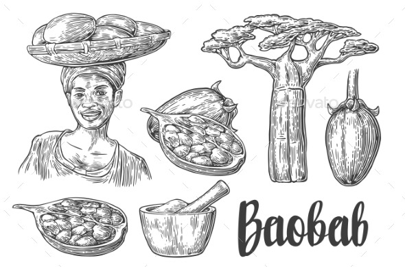 Baobab Fruit, Tree And Seeds. Mortar And Pestle