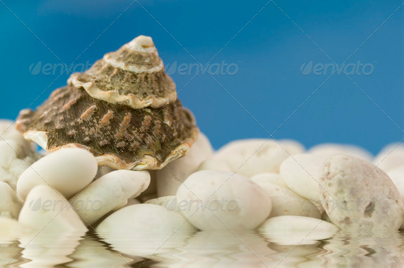 seashell on the beach - Stock Photo - Images