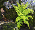 Ferns growing on a rocky ledge - PhotoDune Item for Sale