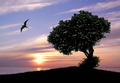 Sunset Tree Tranquility - PhotoDune Item for Sale