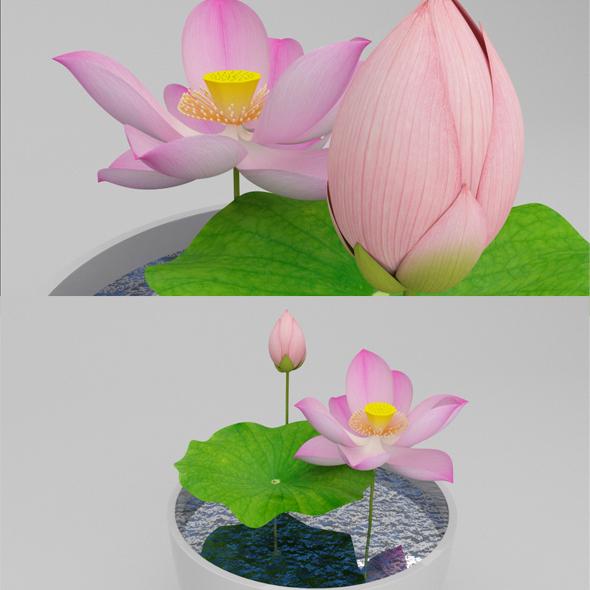 Lotus In Bowl - 3DOcean Item for Sale