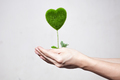Human hands holding tree in heart-shape in white isolated background