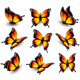 Orange Butterfly in Different Positions\