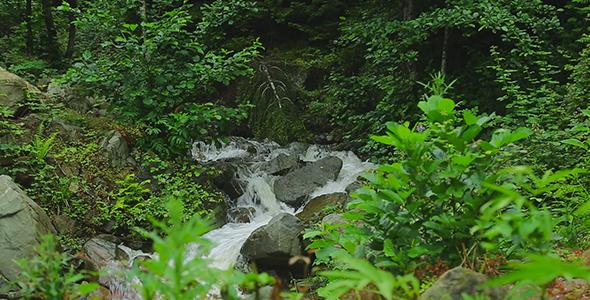Running Water in Forest - Nature Arkistofilmit