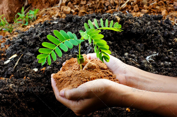 growing tree in hand - Stock Photo - Images