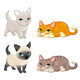 Group of Cats with Different Colors