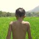 Kid Walking In Rice Field