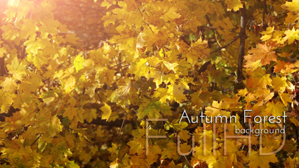 Download Autumn Forest with Golden Leaves nulled download