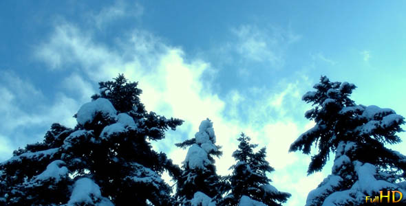 Snowy Firs and Clouds