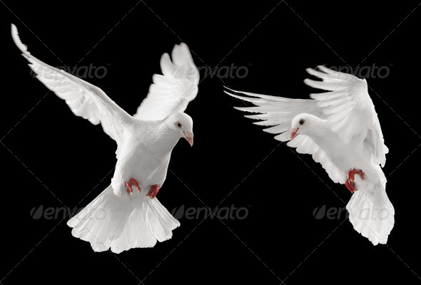 Stock Photo - PhotoDune two doves 1611569