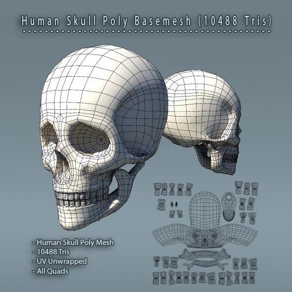 Skull_BaseMesh_590x590_JPG_PREVIEW.jpg