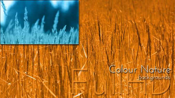 Nature Background - Nature Arkistofilmit