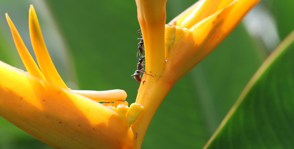 Ants Communication Full HD