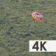 Tourists Sailing on Parachute above the Sea