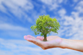 Hands holding tree with burred blue sky background.