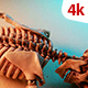 Human Skeleton 248