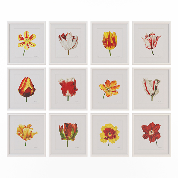 Charlotte Morgan Watercolour Tulips - 3DOcean Item for Sale