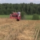 Farmer Harvest Wheat Plant With Red Combine In Agriculture Field