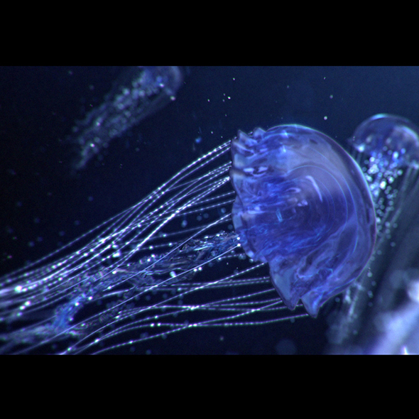 Jellyfish Animated - 3DOcean Item for Sale