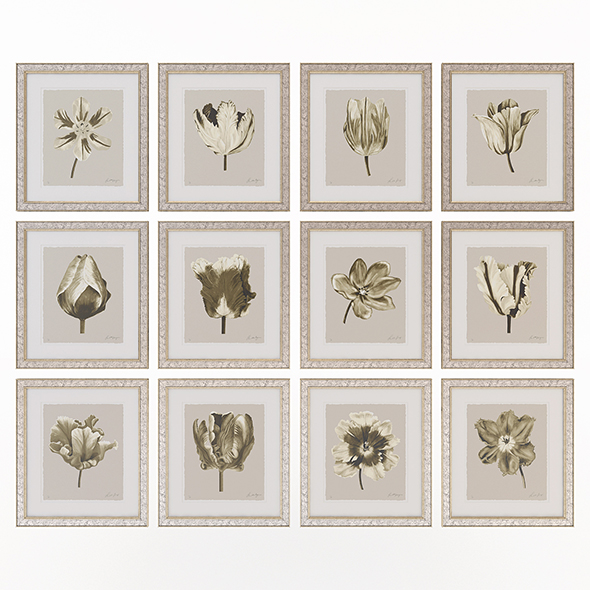 Charlotte Morgan Watercolour Tulips Sepia - 3DOcean Item for Sale