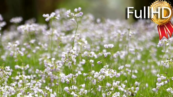 Download a Carpet of Flowers Swaying in the Wind. nulled download