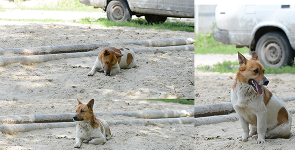 Download Dog Lying On The Sand nulled download