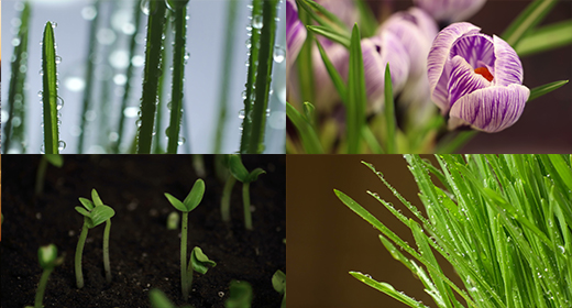 Plant 4K