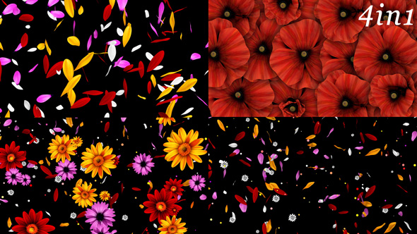 Download Colorful Flowers Pack nulled download