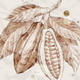 Hand Drawn Branch With Cocoa Beans - GraphicRiver Item for Sale