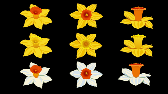 Flowers Daffodils Pack - Nature Elements Motion Graphics