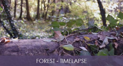 Forest - Slider & TimeLapse