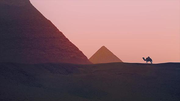 Camel kävely lähellä pyramidit - Taustat Motion Graphics