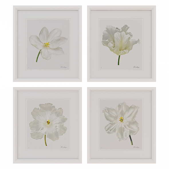 Charlotte Morgan White Watercolour Tulips - 3DOcean Item for Sale