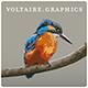 voltairegraphics