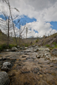 lovely alpine scenery with motion blurred mountain stream