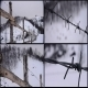Barbed Wire 1 - VideoHive Item for Sale