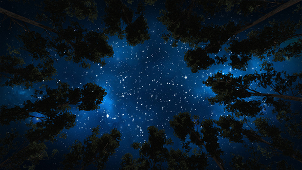Kaunis Night Sky, Linnunrata And The Trees - Taustat Luonnosta Motion Graphics