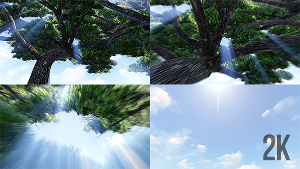 Flying Through auringonsäteet Tree To The Sky - Light Taustat Motion Graphics