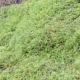 Toad Natterjack Amphibia Animal Crawl Swarm Moss