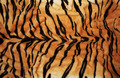 Tiger skin - PhotoDune Item for Sale