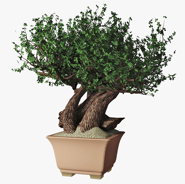 3DOcean Bonsai 16544436