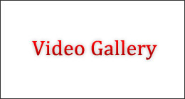 Dynamic video gallery