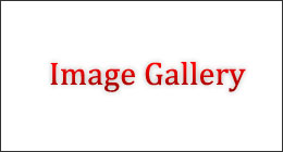 Dynamic image gallery