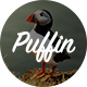 Puffin - A Responsive WordPress Blog Theme
