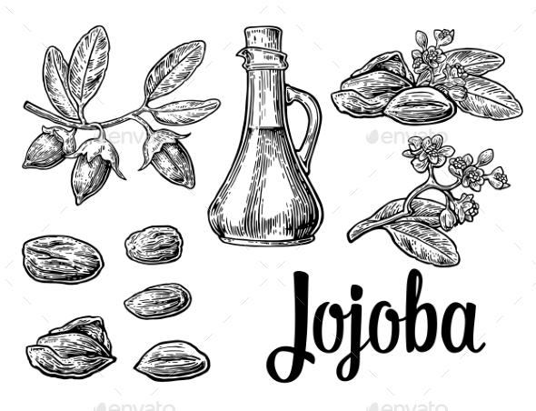 Jojoba Fruit with Glass Jar