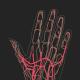 Anatomy Animation Pack
